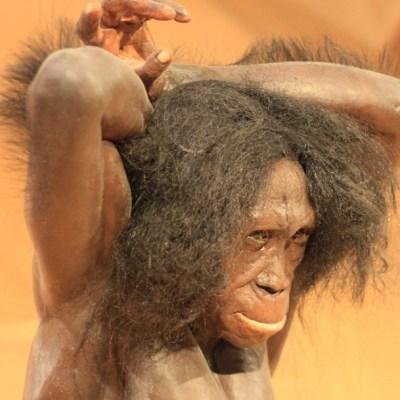 Cambio climático pudo aniquilar a otras especies humanas: estudio