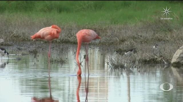 policia ecologica rescata aves y especies desorientadas en yucatan tras inundaciones