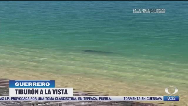 tiburon sorprende a turistas en acapulco