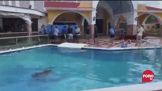 trasladan a delfines a alberca de hotel ante impacto de delta