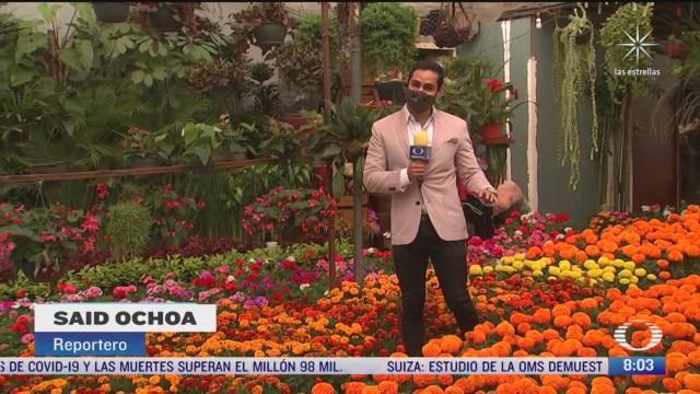 xochimilco se pinta con los colores de la flor de cempasuchil