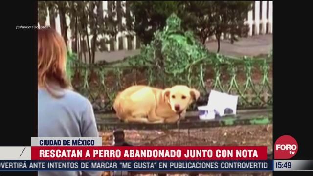abandonan a un perro en banca de coyoacan y lo rescatan