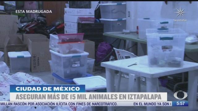 aseguran mas de 15 mil animales en alcaldia iztapalapa