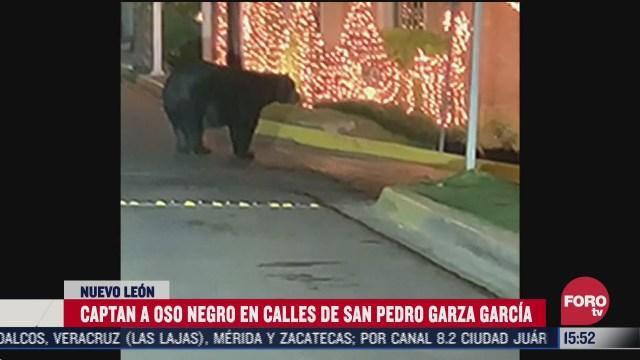captan a oso en calle de monterrey nuevo leon