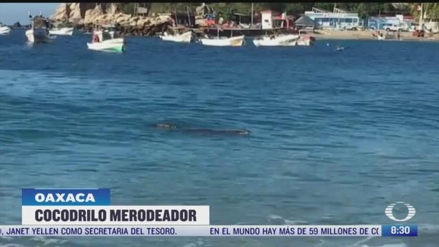 cocodrilo sorprende a turistas en playa marinero en oaxaca