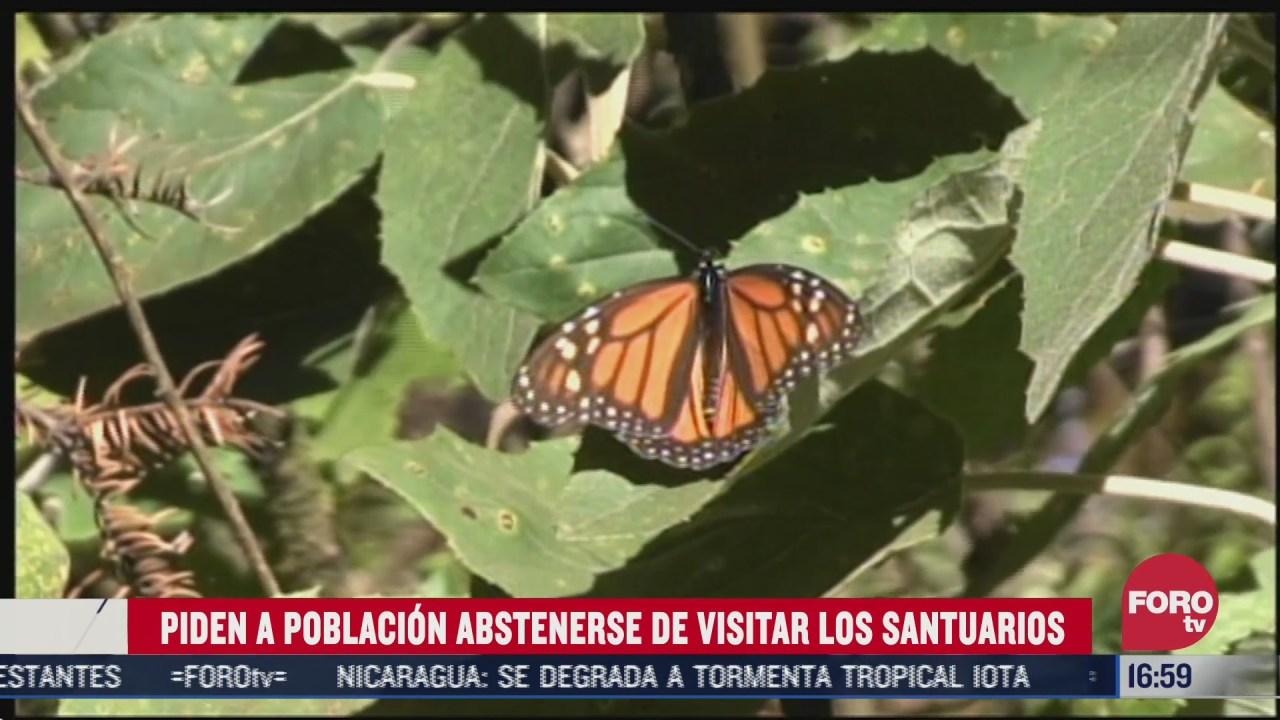 disminuye migracion de mariposas monarca