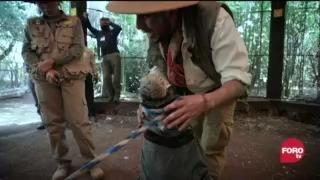 el manejo y cuidado de los cocodrilos