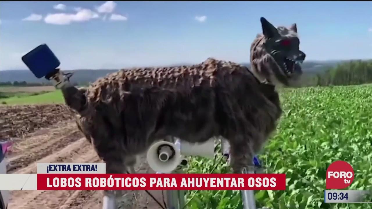 extra extra lobos roboticos para ahuyentar osos