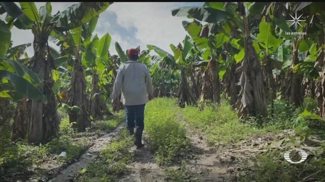 beneficiarios de sembrando vida afectados en tabasco podrian recibir apoyo extraordinario