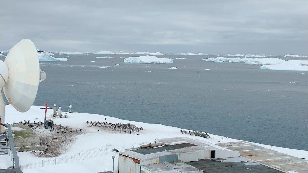 Primeros casos de covid en Antártida en base militar de Chile