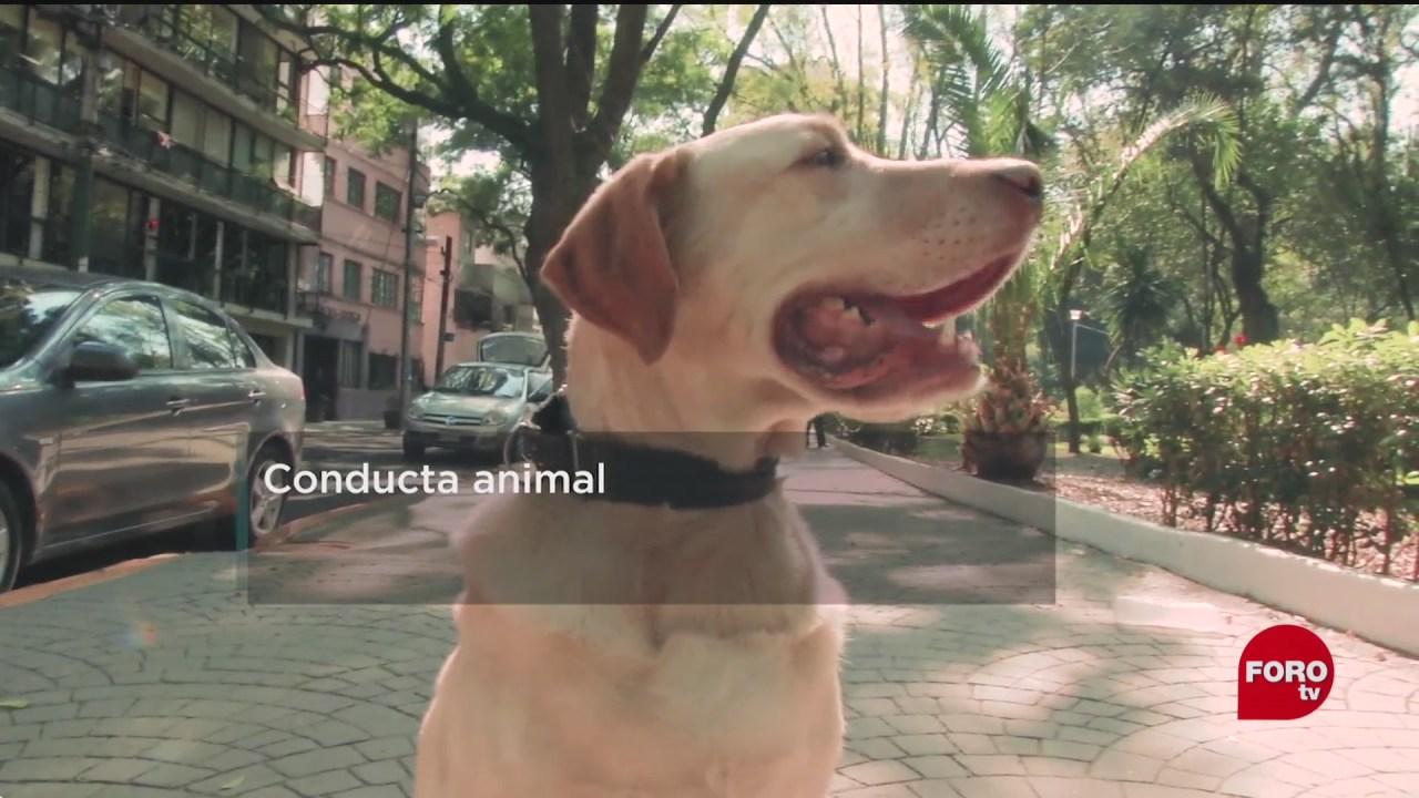 el 70 de los perros en mexico son callejeros