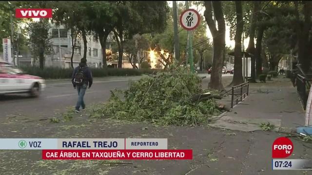 fuertes vientos derriban arbol en taxquena y cerro libertad cdmx