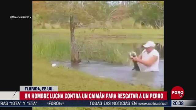 hombre lucha contra un caiman para rescatar a su perro