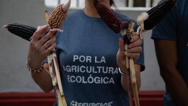 Mayas-denuncian-siembra-de-maíz-transgénico-en-Campeche