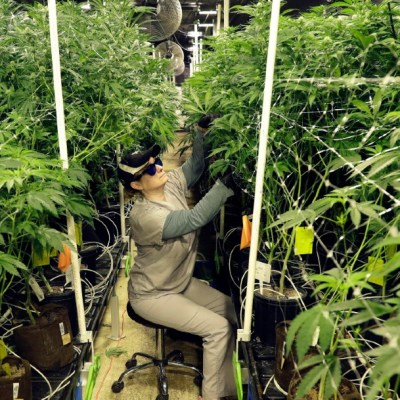 La Cámara de Representantes de Estados Unidos aprobó la despenalización de la mariguana a nivel federal