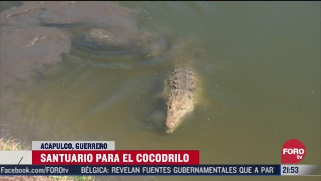 cocodrilario de acapulco resguarda cocodrilos y manglares