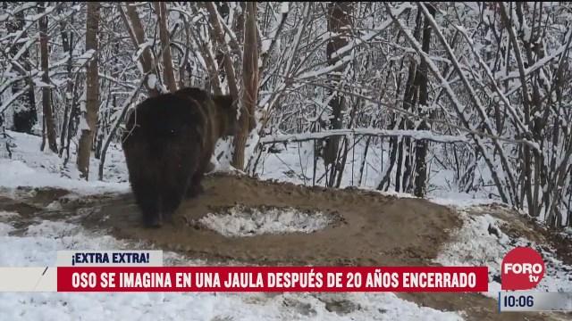 extra extra oso se imagina jaula despues de 20 anos encerrado