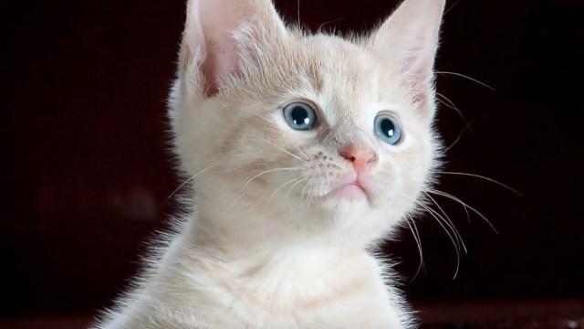Asisten al cumpleaños de un gato y se contagia de COVID-19