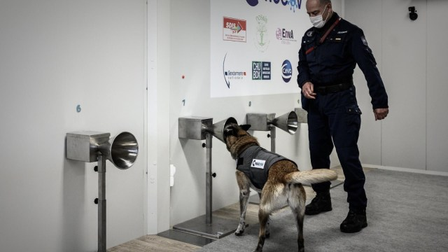 Francia entrena perros para detectar COVID-19 a través del sudor humano. (Foto: Twitter)