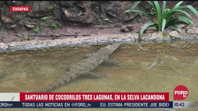 santuario de cocodrilos promueve biodiversidad en chiapas