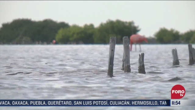 asi esta en este momento la poblacion de flamencos en puerto progreso yucatan