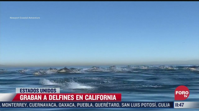 decenas de delfines sorprenden a embarcacion en california