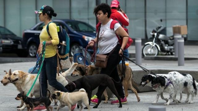 Diputados-aprueban-reformas-para-castigar-el-maltrato-animal