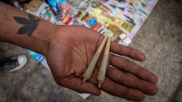 Senado-pide-al-gobierno-de-CDMX-retirar-plantón-de-marihuana