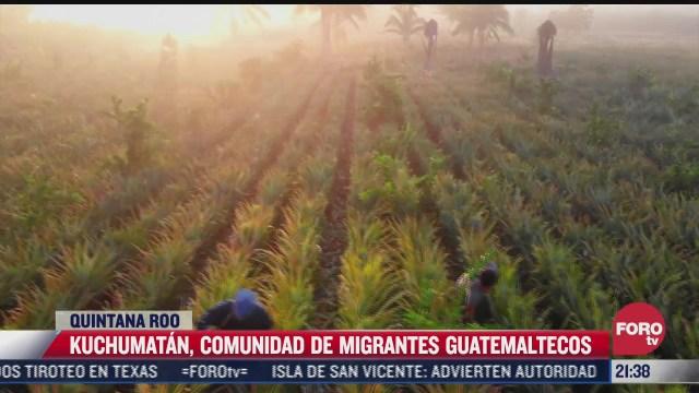 familias guatemaltecas que llegaron a mexico son productoras de pina