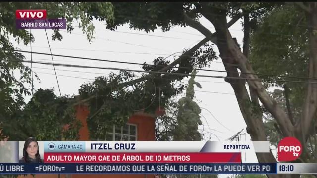 hombre cae de arbol de 10 metros de altura en la alcaldia coyoacan