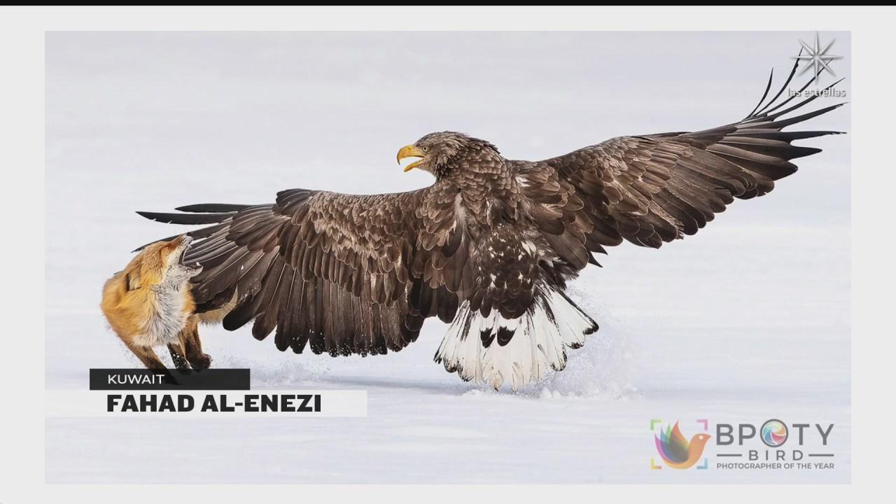 revelan finalistas del concurso de fotografo de aves del ano