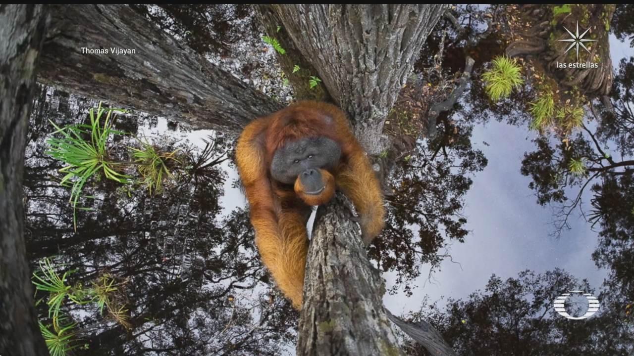 anuncian a los ganadores del world nature photography awards