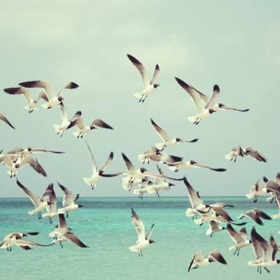 Estudio revela que hay 6 veces más aves que humanos en el mundo