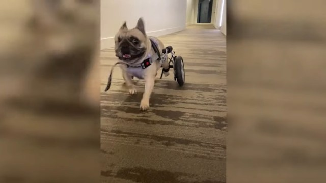perros, mascotas, video viral, redes sociales