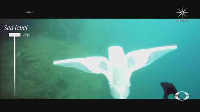 pez robot baja a profundidades del oceano