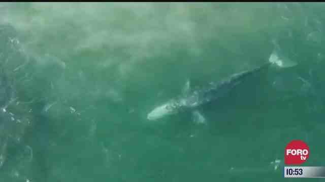 wally la ballena perdida del mediterraneo