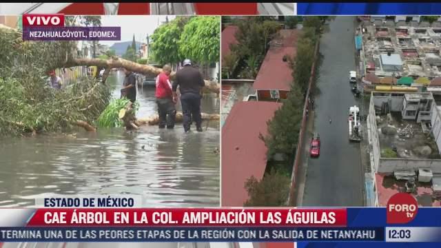 cae arbol de 8 metros de altura en plena inundacion en nezahualcoyotl