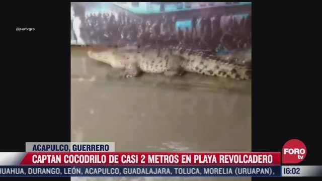 capturan cocodrilo de casi dos metros en playa de acapulco