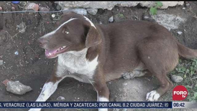 cuchufleto perro que espera a su dueno uno de los fallecidos en mina de muzquiz