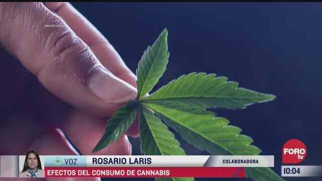 el consumo de cannabis