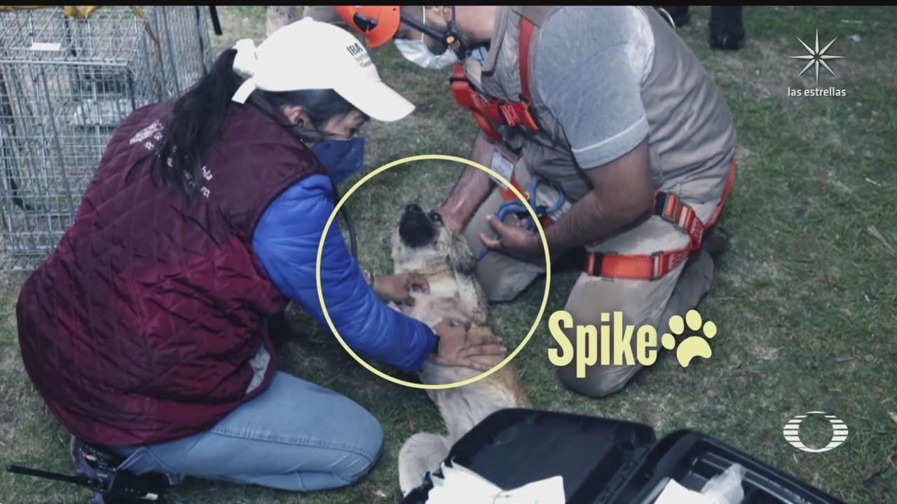En 20 minutos rescataron a los perritos que cayeron a socavón en Puebla