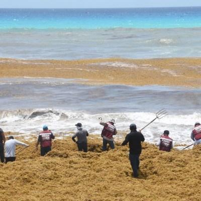 Trabajadores de la Zona Federal Marítimo Terrestre (Zofemat) realizan la limpieza del exceso de sargazo en las costas de la playa Marlín