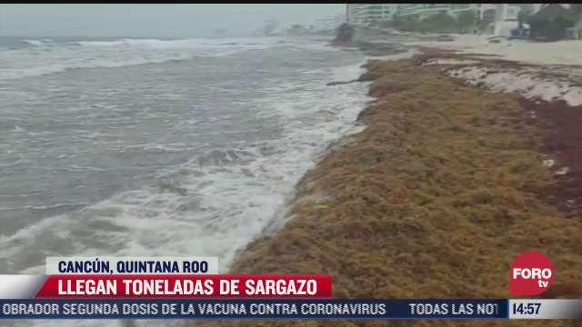 toneladas de sargazo cubren las playas de cancun