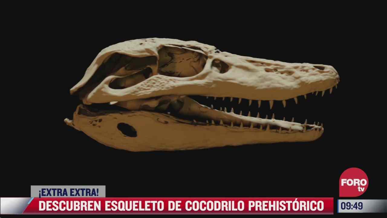 extra extra descubren esqueleto de cocodrilo prehistorico