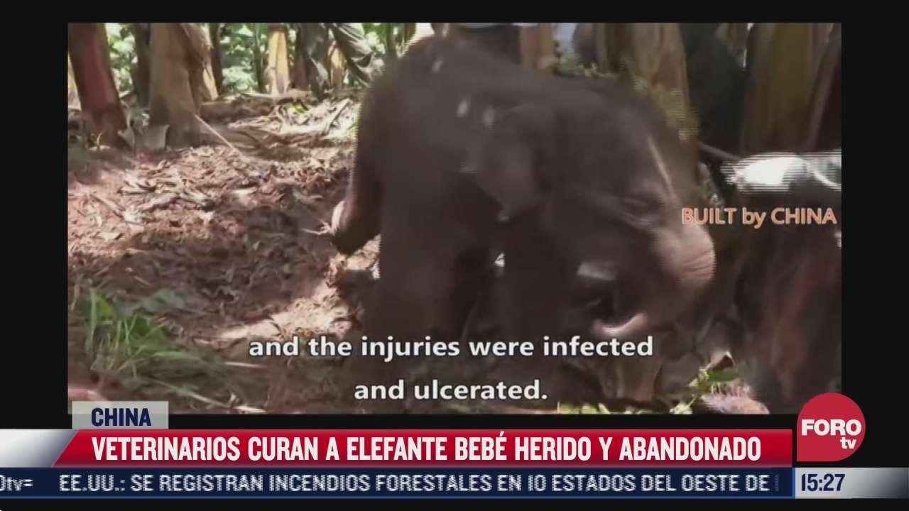 veterinarios curan a elefante abandonado en china