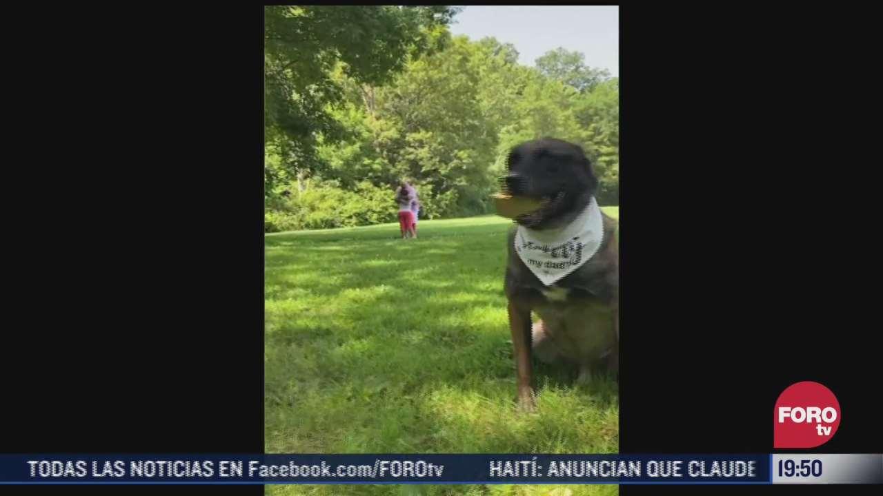 video perrito ayuda a hombre a pedir matrimonio en eeuu