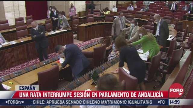 video rata interrumpe sesion en parlamento de andalucia