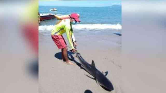 Oleaje saca a tiburón a la playa en Puerto Vallarta