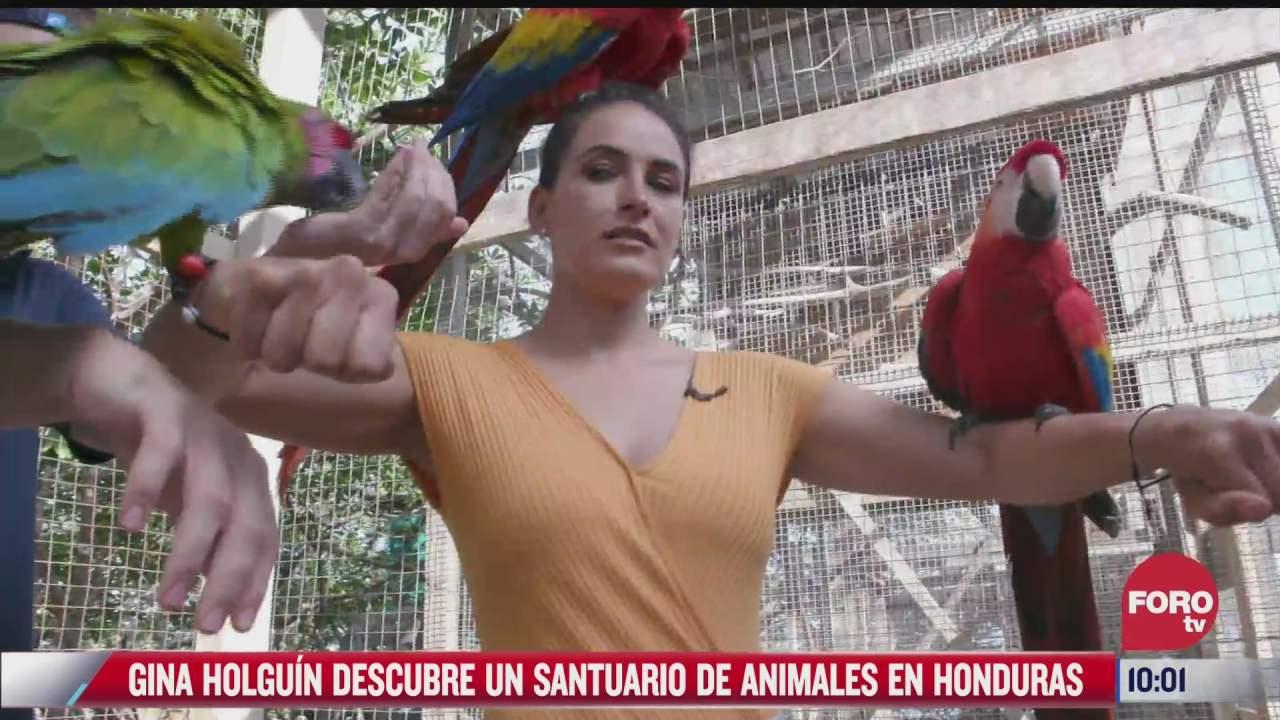 santuario de animales en honduras
