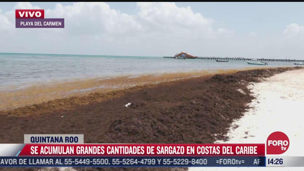 sargazo se acumula en playa de quintana roo
